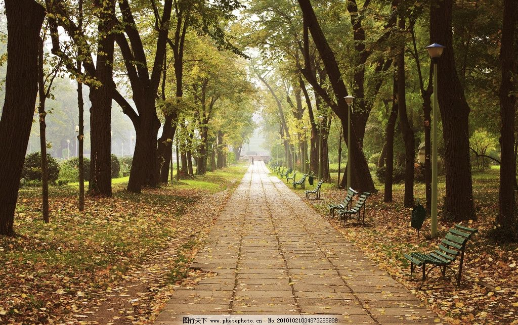 长椅 落叶 枯叶 美丽风光 风景图片 美丽风景 风光图片 秋季风光 自然