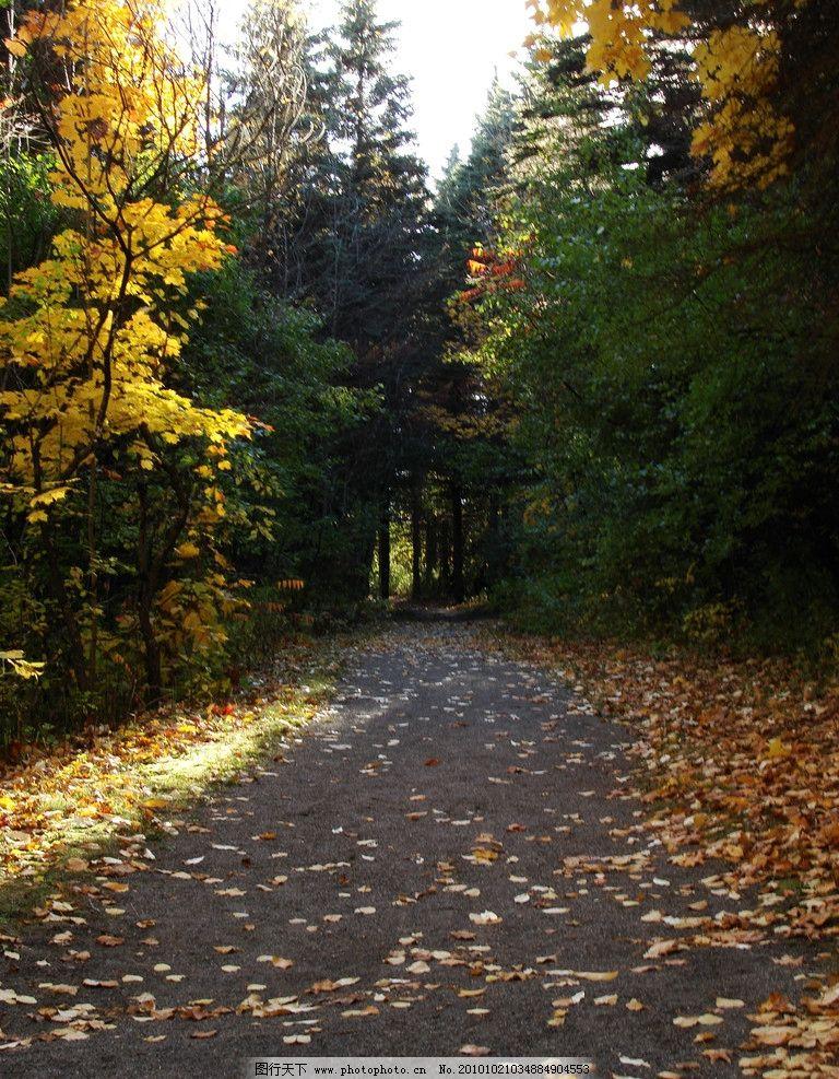 秋季 秋季景色 秋天景色 落叶树木 秋天树木 落叶 枯叶 美丽风光 风景