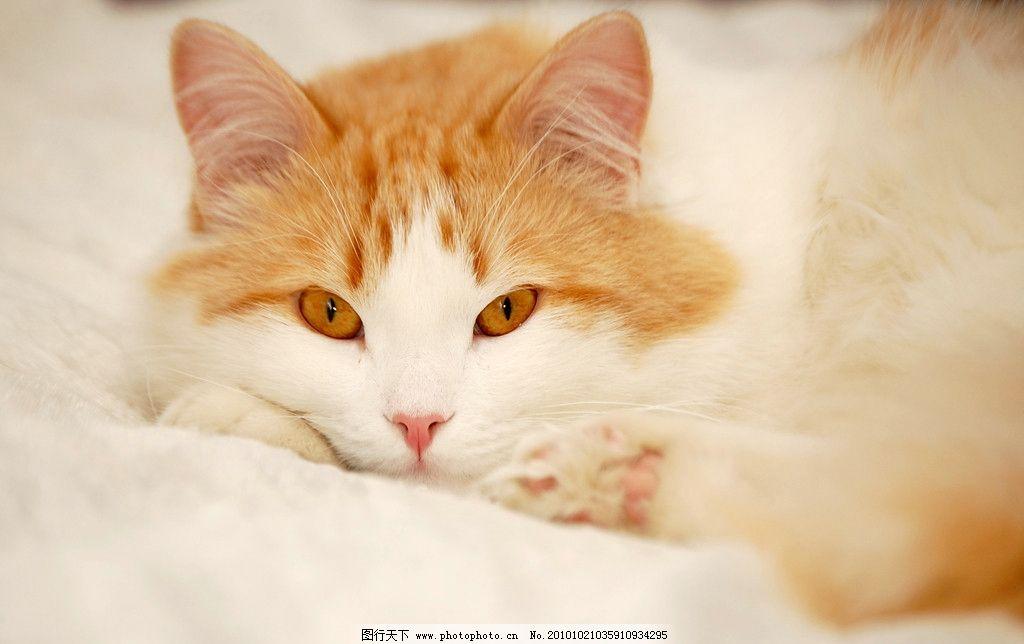 小猫 可爱的小猫 动物 宠物 家禽家畜 生物世界 摄影 300dpi jpg