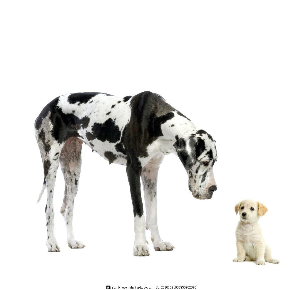 动物 狗 斑点狗 小狗 宠物图片