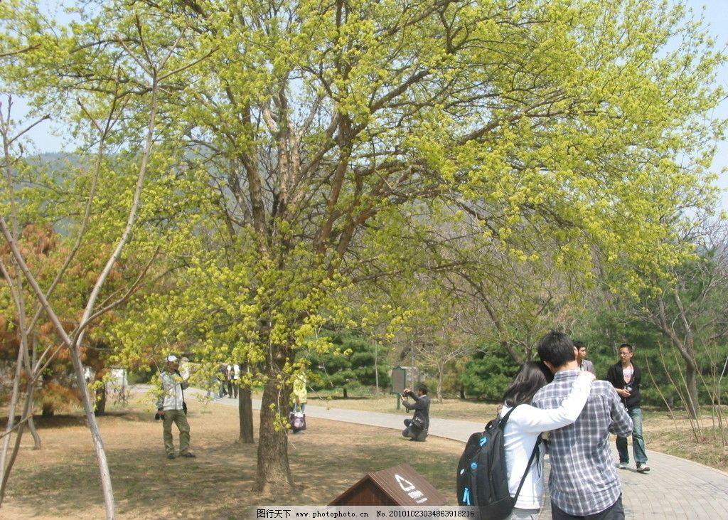 北京植物园 植物园 绿树 恋人 春天 树木 大树 植物 自然风景 自然