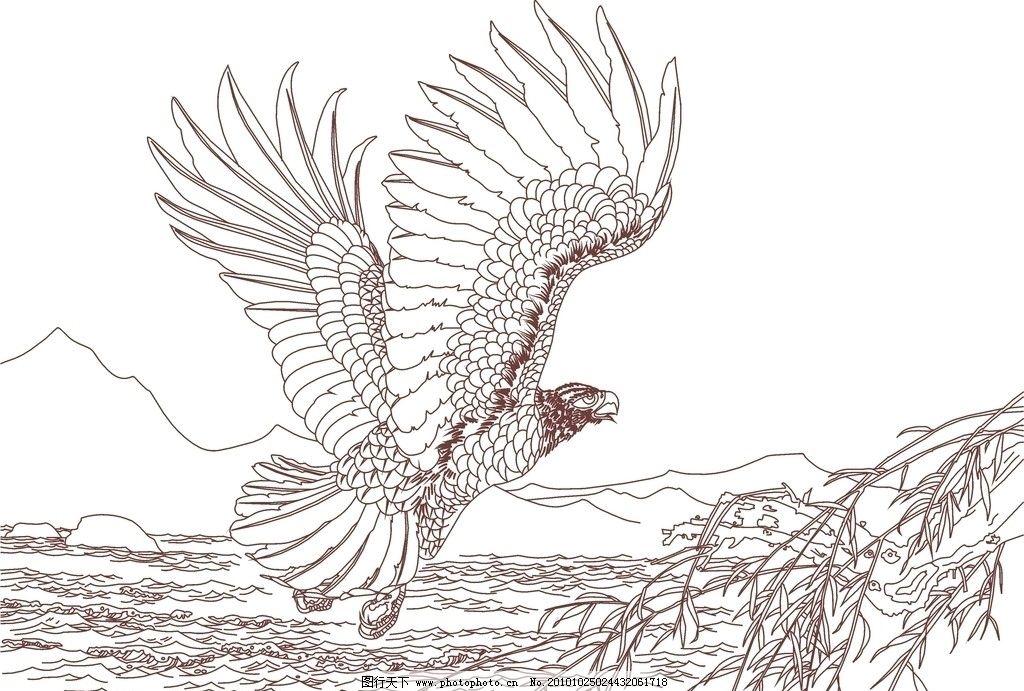 飞翔的鹰手绘图