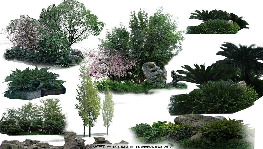 树盆景图片名称大全