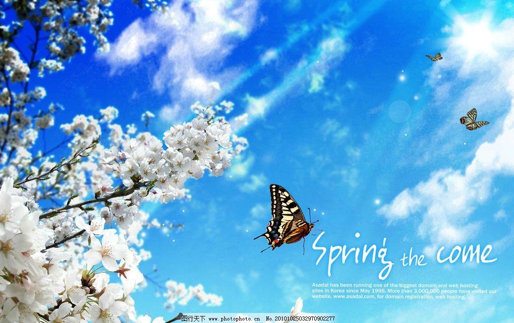 阳光蝴蝶飞图片,蓝天 梅花 春天 温暖 风景 春景-图行