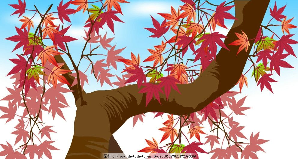 枫叶树 枫叶 红叶 大树 蓝天 白云 树叶 叶子 树枝 树干 矢量花 花草
