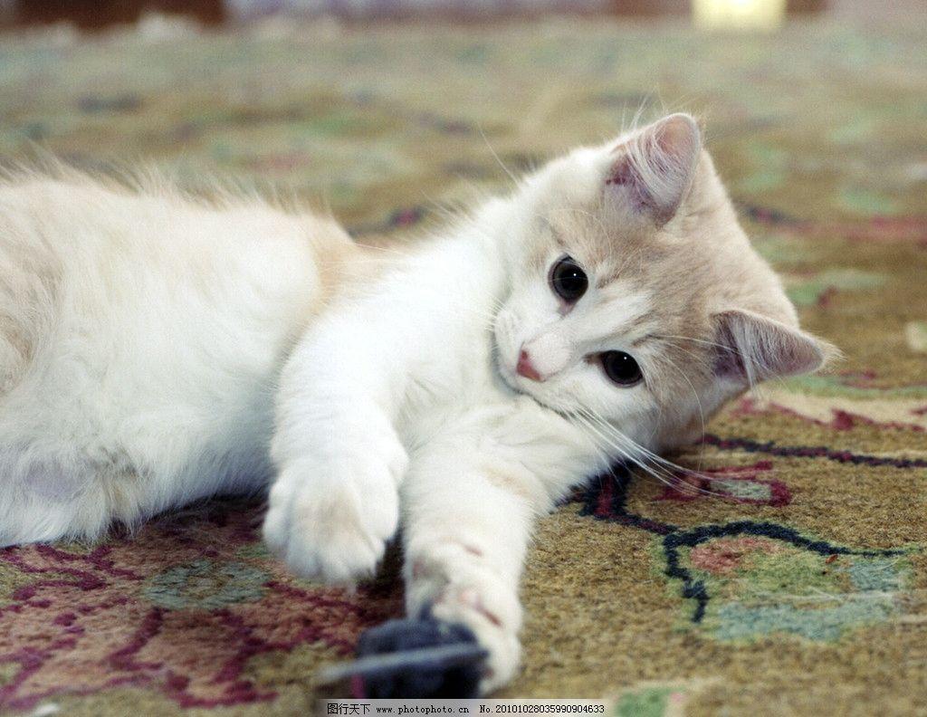 生物 动物 宠物 小猫 摄影 照片 写真图片