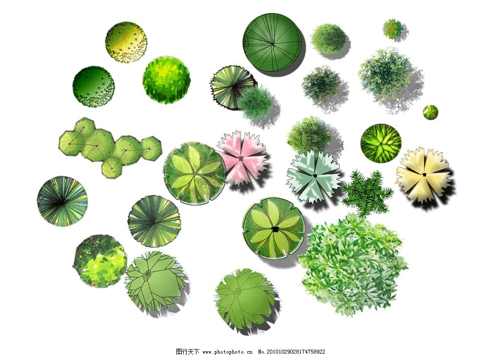 植物 彩色平面图