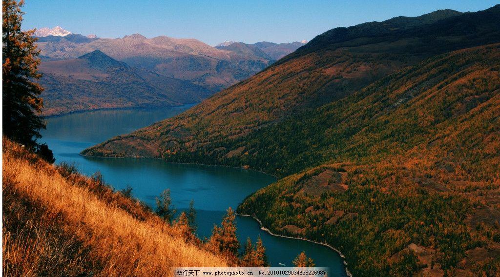 塔松 山巒 哈納斯湖 雪山 藍天 白云 新疆哈納斯 風景名勝 自然景觀