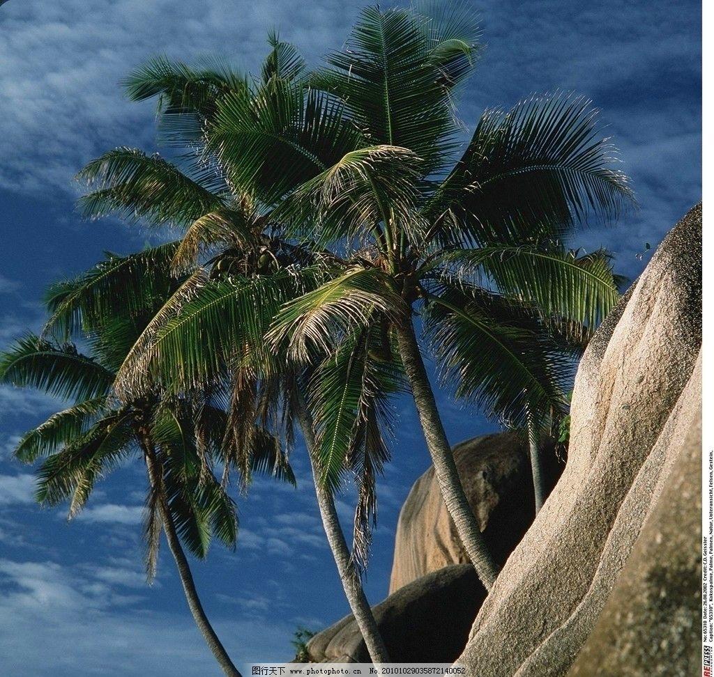 四季树木 树木 大树 树干 树枝 椰子树 椰树 海南 自然景观 绿色 风光