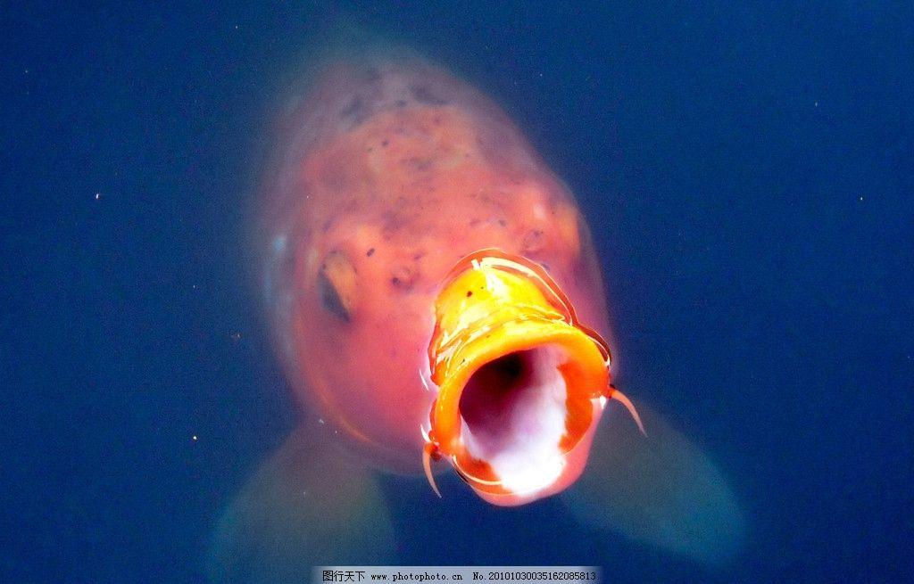 鱼儿写真 生物 动物 水中 鱼类 摄影 照片 海洋生物 生物世界