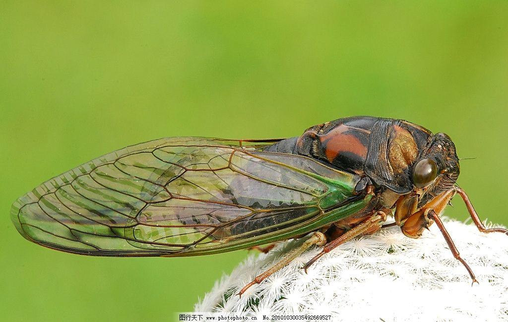 昆虫写真 生物 动物 飞行 昆虫类 摄影 照片 写真 昆虫 生物世界 摄影