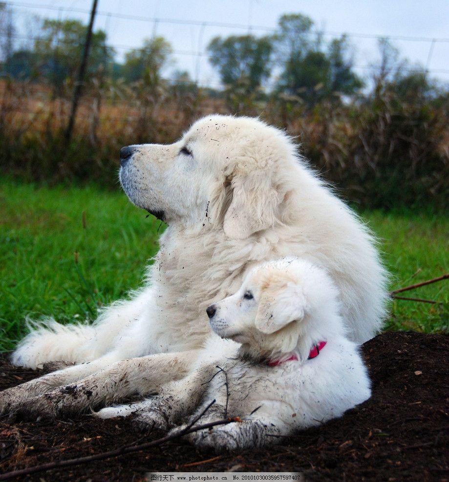 狗儿写真 生物 动物 宠物 小狗 摄影 照片 写真 家禽家畜 生物世界