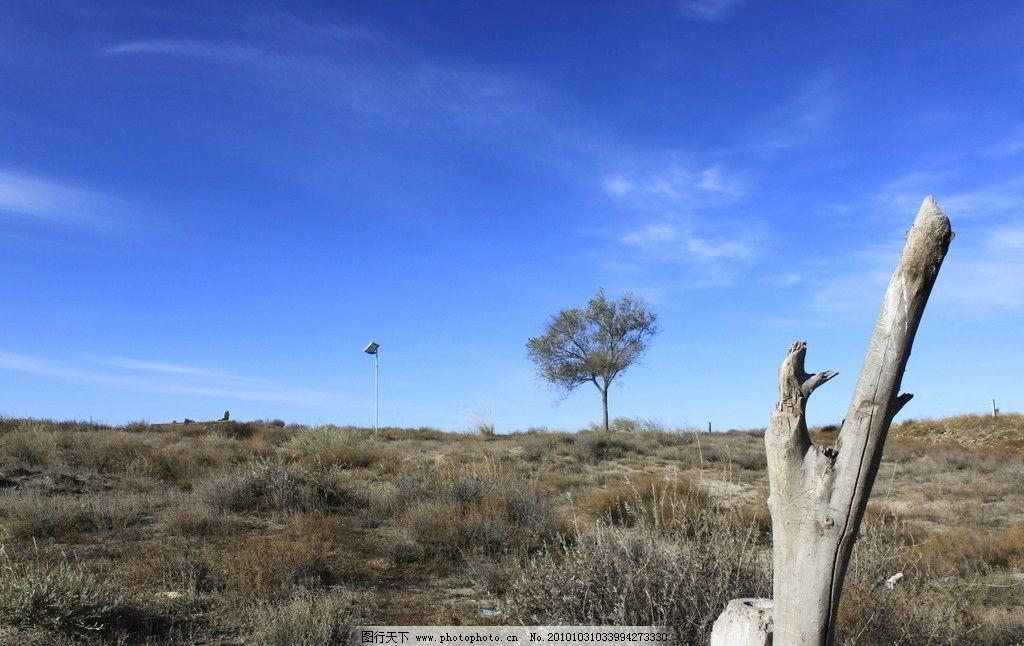 枯木小树蓝天图片