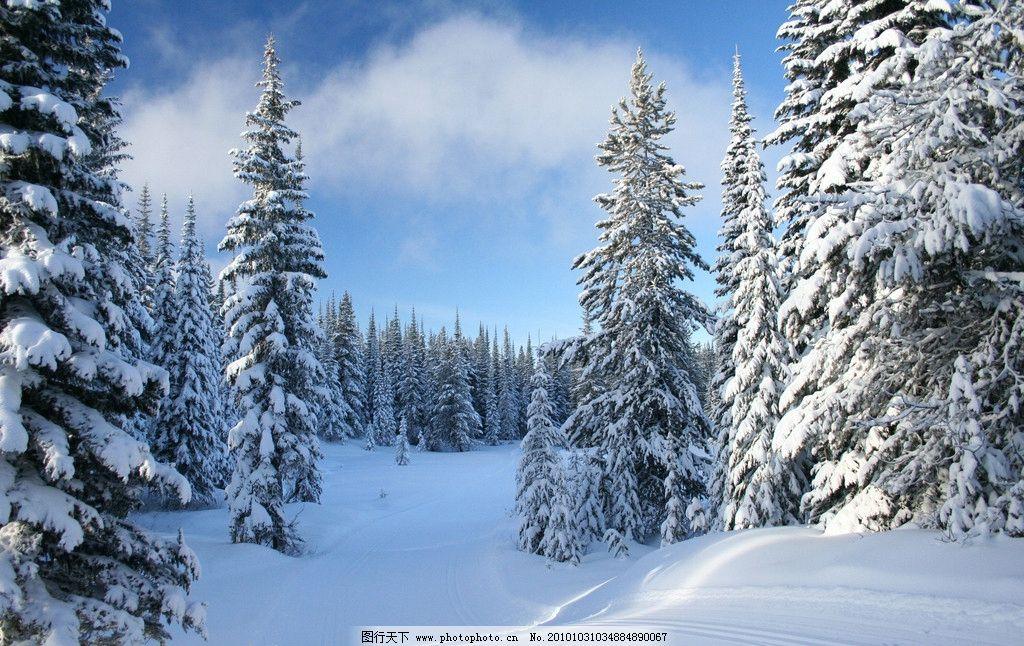 自然景观 自然风景  冬季雪景高清图片 冬季 冬天 雪景 雪地 雪树