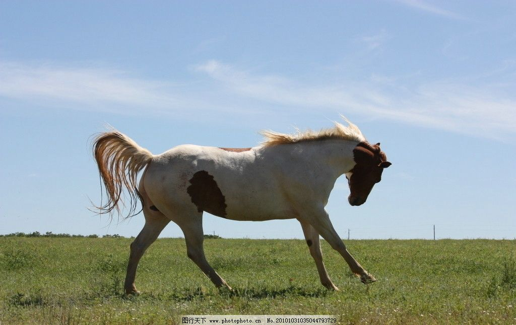 草原上的马 草地 马 马匹 骏马 蓝天 动物 野生动物 生物世界 摄影 72