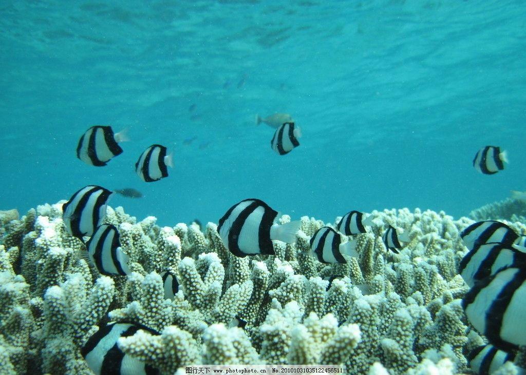 海底世界 海洋 鱼类 生物 藻类 海藻 海鱼 海底 海水 海洋鱼类 深海