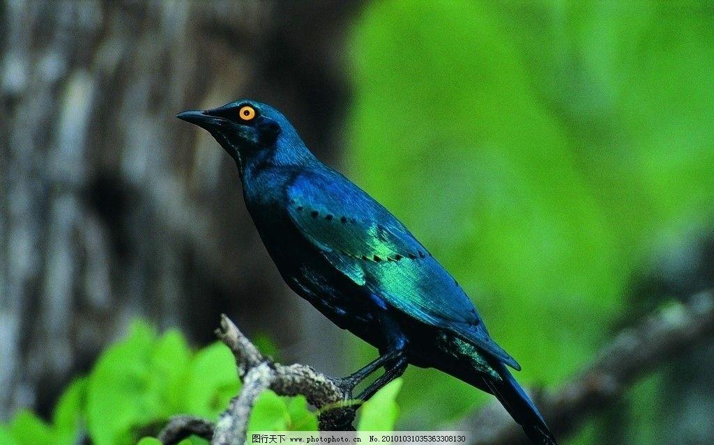 鸟类动物的代表动物