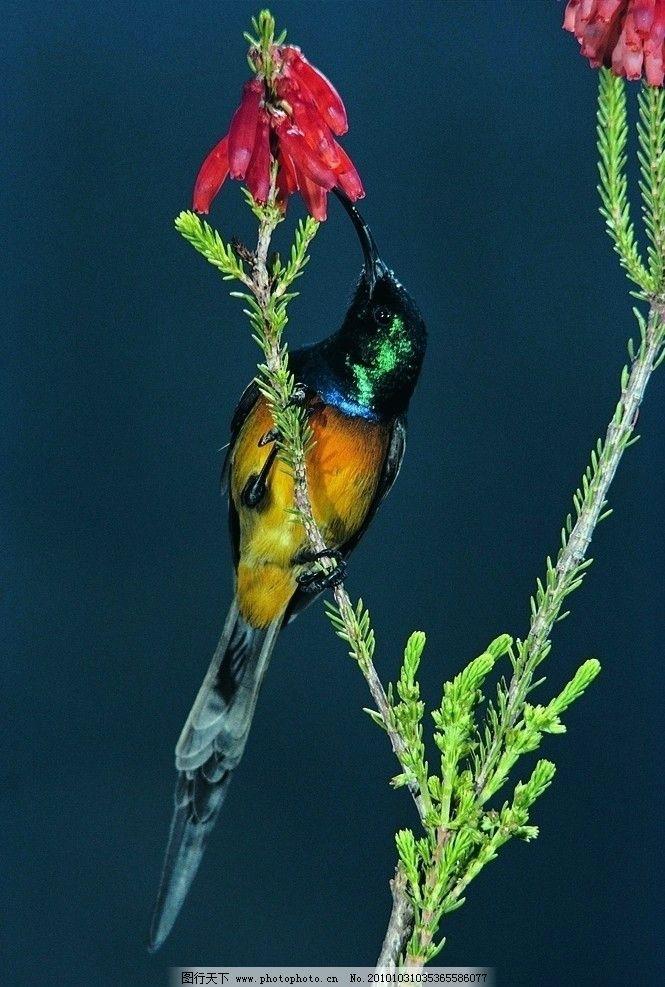 鸟类图片 鸟 鸟类 动物 生灵 生物世界 野生动物 飞禽 鸟类摄影 禽鸟