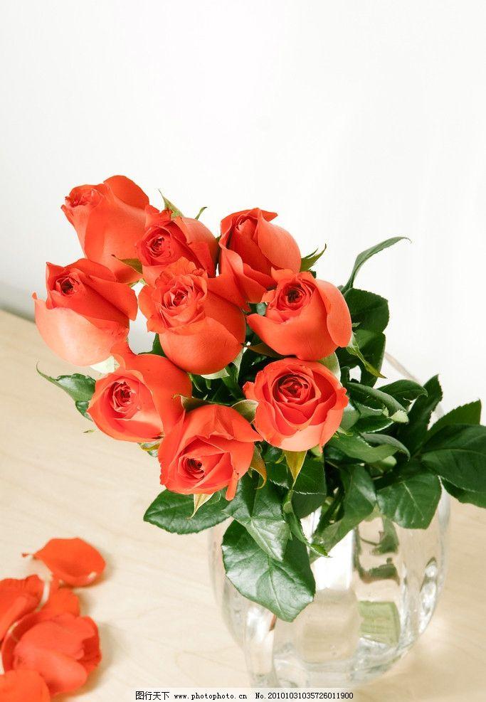 玫瑰花 红玫瑰 花瓣 绿叶 玻璃花瓶 水晶花瓶 图库 花卉 花草 生物