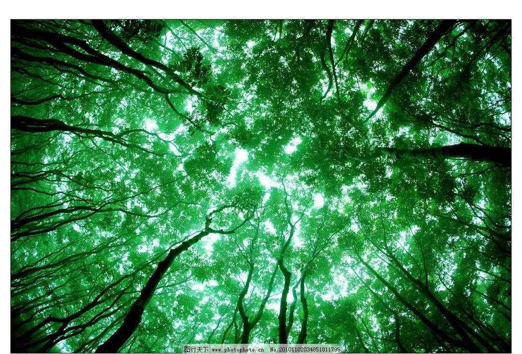 绿色森林 树冠 自然风景 自然景观 摄影