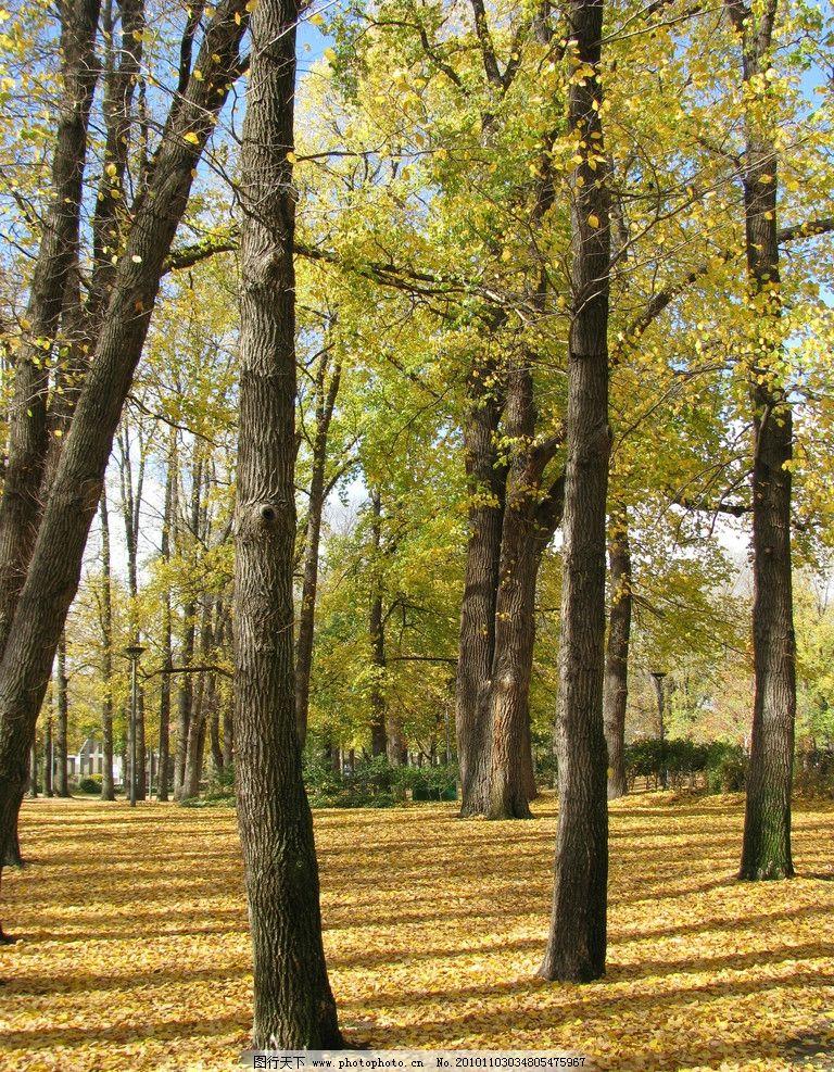 秋季风光 秋天美景 秋天 树木 树林 落叶 落叶满地 美丽风光 美丽风景