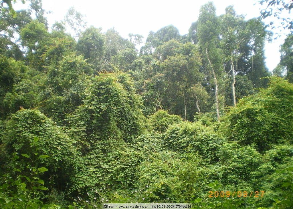 热带雨林 摄影 自然景观 自然风景 云南 植物 森林 72dpi jpg