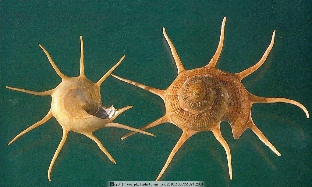 海洋贝壳图片