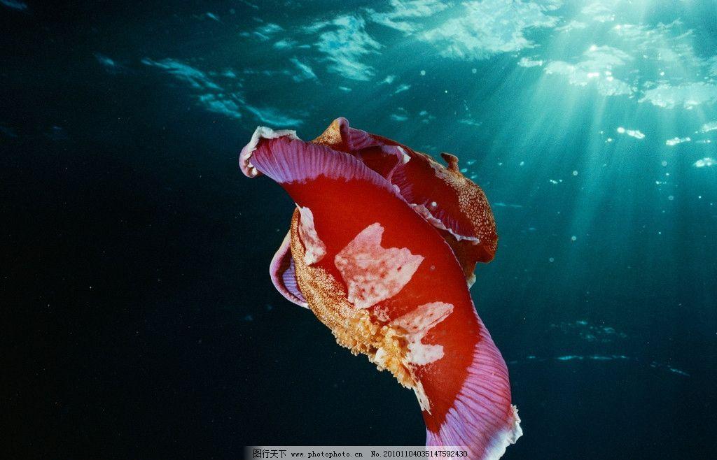 海里面的动物有什么