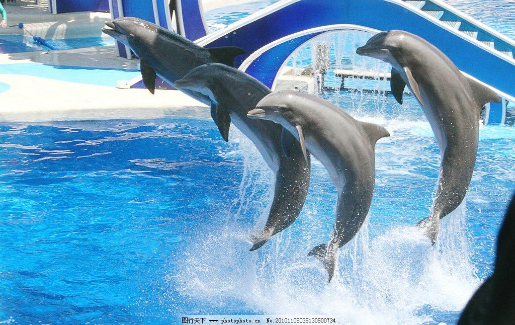 海豚 动物摄影 水中生物 海洋生物 海豚摄影 海豚图片 海豚素材 海豚