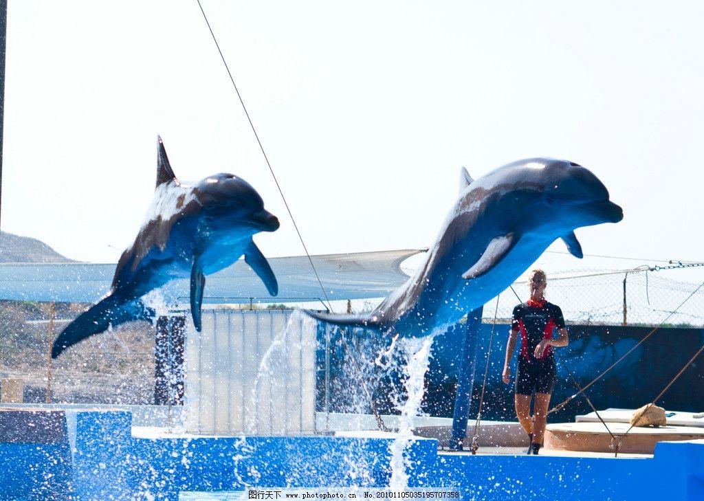 海豚 动物摄影 水中生物 海洋生物 海豚摄影 海豚素材 海豚图集