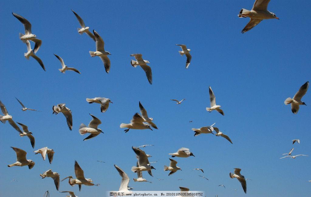 成群的鸟图片