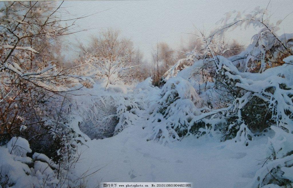 白山晨曦 陶世虎 水彩画 写实 雪景 树木 冬天 中国画