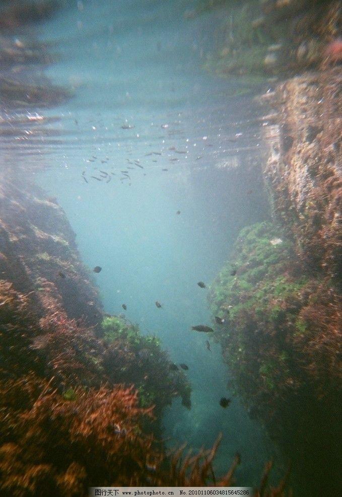 海底世界 海 海底 珊瑚 鱼 鱼群 青苔 石头 水纹 气泡 珊瑚礁 自然