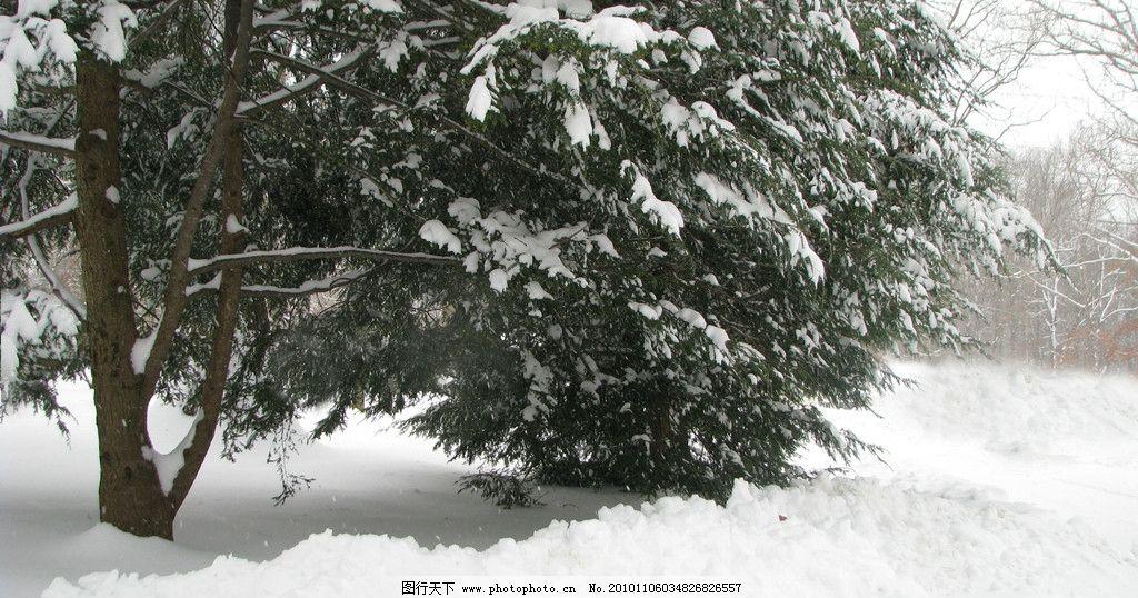 冬天树木 风光摄影图片