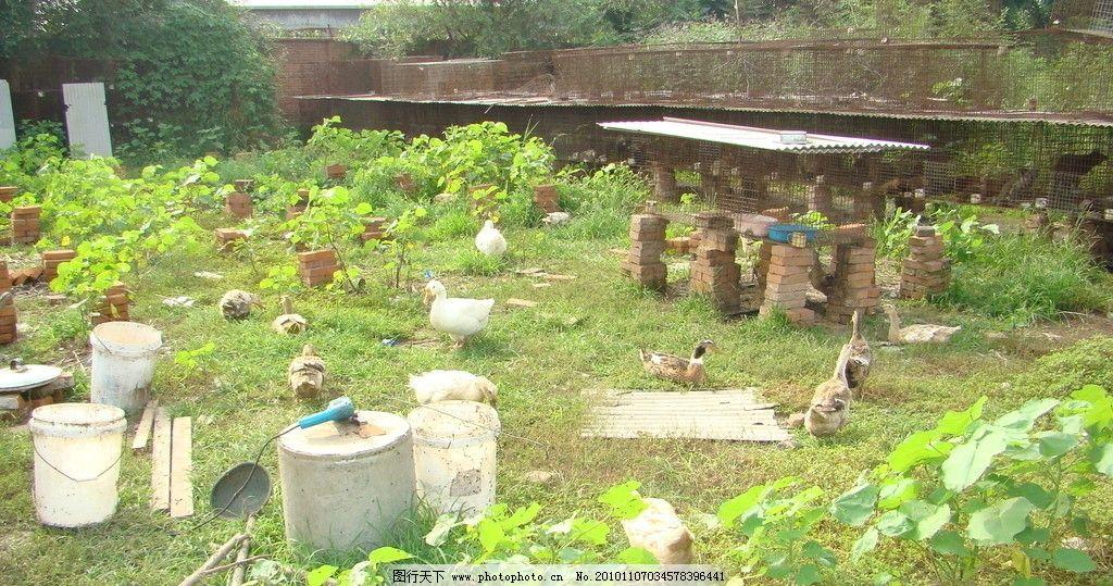 庄园 菜园子 菜 植物 院子 农村 景色 农家 石头 田园风光 自然景观