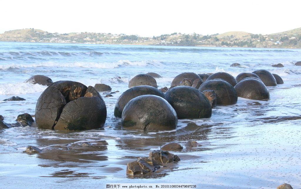 海边有什么动物
