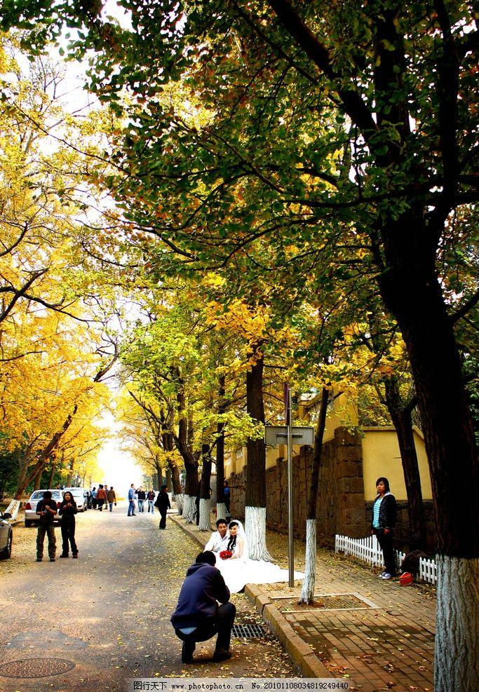 青岛八大关 风景 秋天 黄叶 红叶 八大关 深秋 秋天黄叶 八大关风景