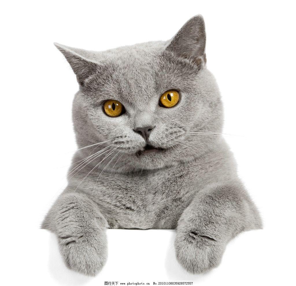 可爱的小猫图片