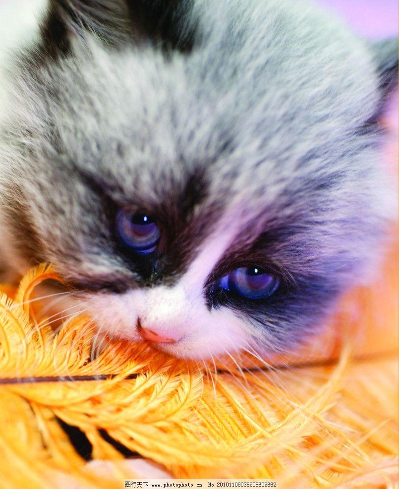 小花猫图图片