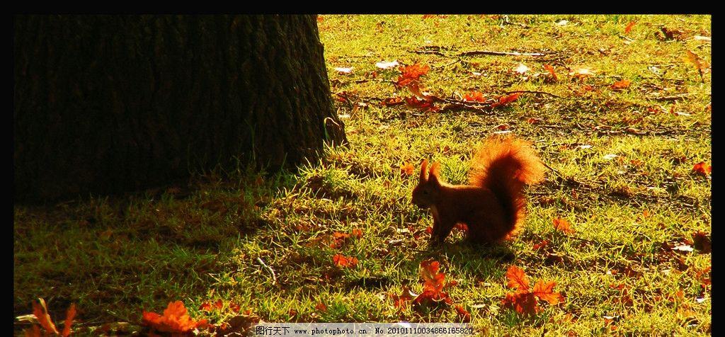 秋天的风景 落叶 秋天风景 秋天 风景 风光 树叶 小动物 松鼠 自然