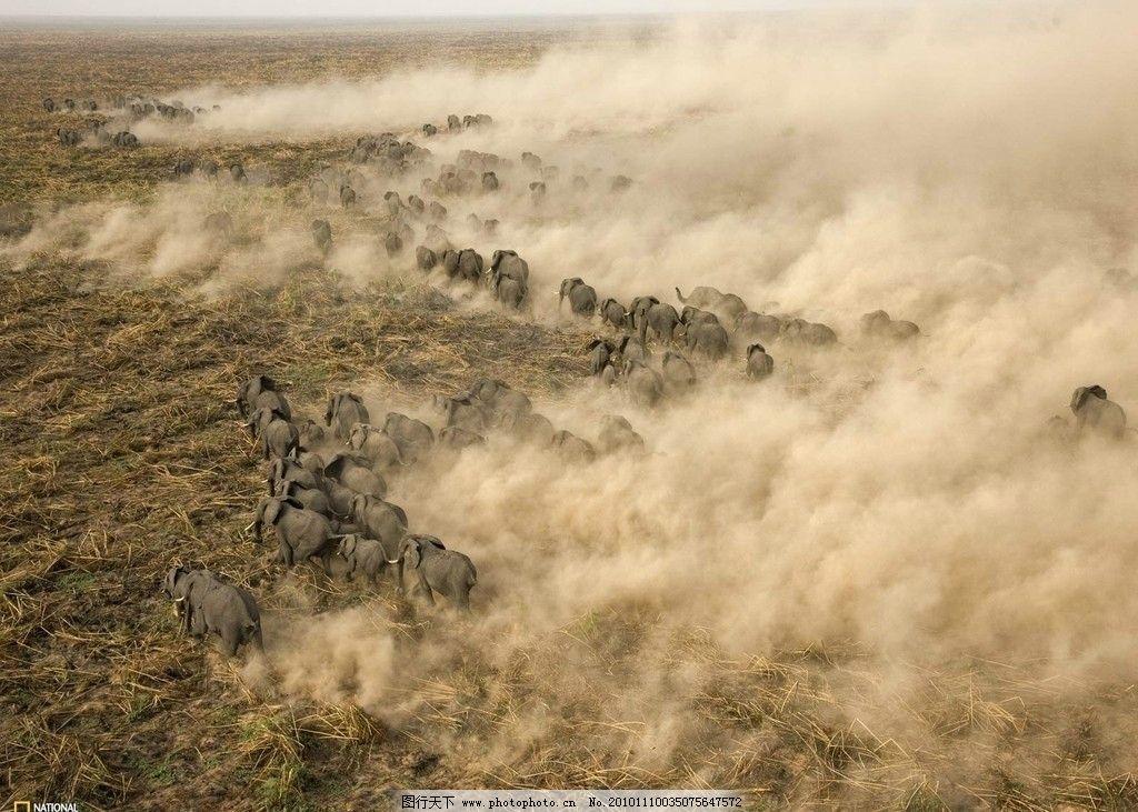 野牛 大象 非洲 探索 奥秘 时间 地理 杂志 群居 动物 动物世界 迁徙
