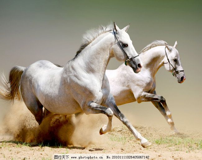 奔跑的马 骏马图 世界名画 骏马图 世界名画 奔跑的马 图片素材 风景