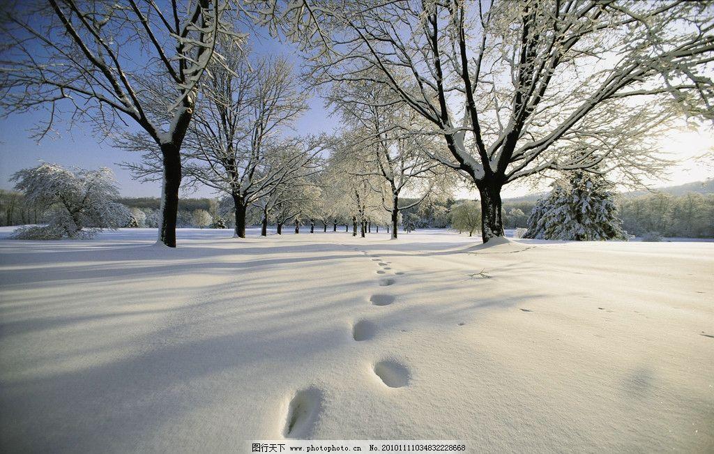 冬季雪景高清图片,冬天 脚印 雪地 雪树 蓝天 白云-图
