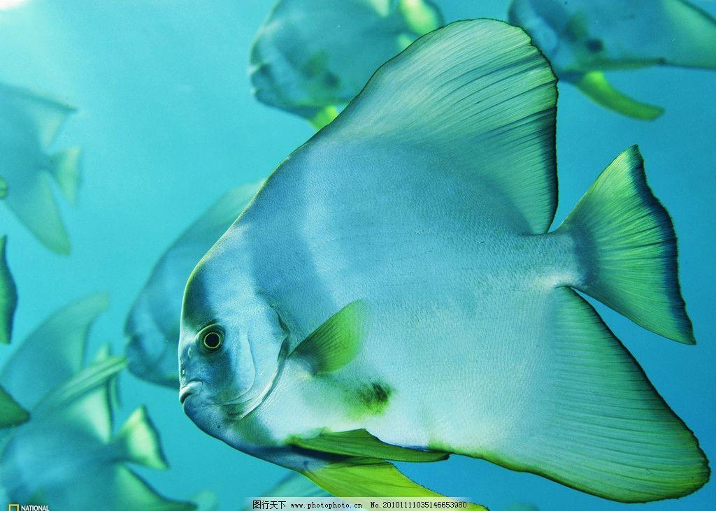 海底世界 热带鱼 海底 生物 动物 有用 游泳 有毒 花色 恐怖 深海