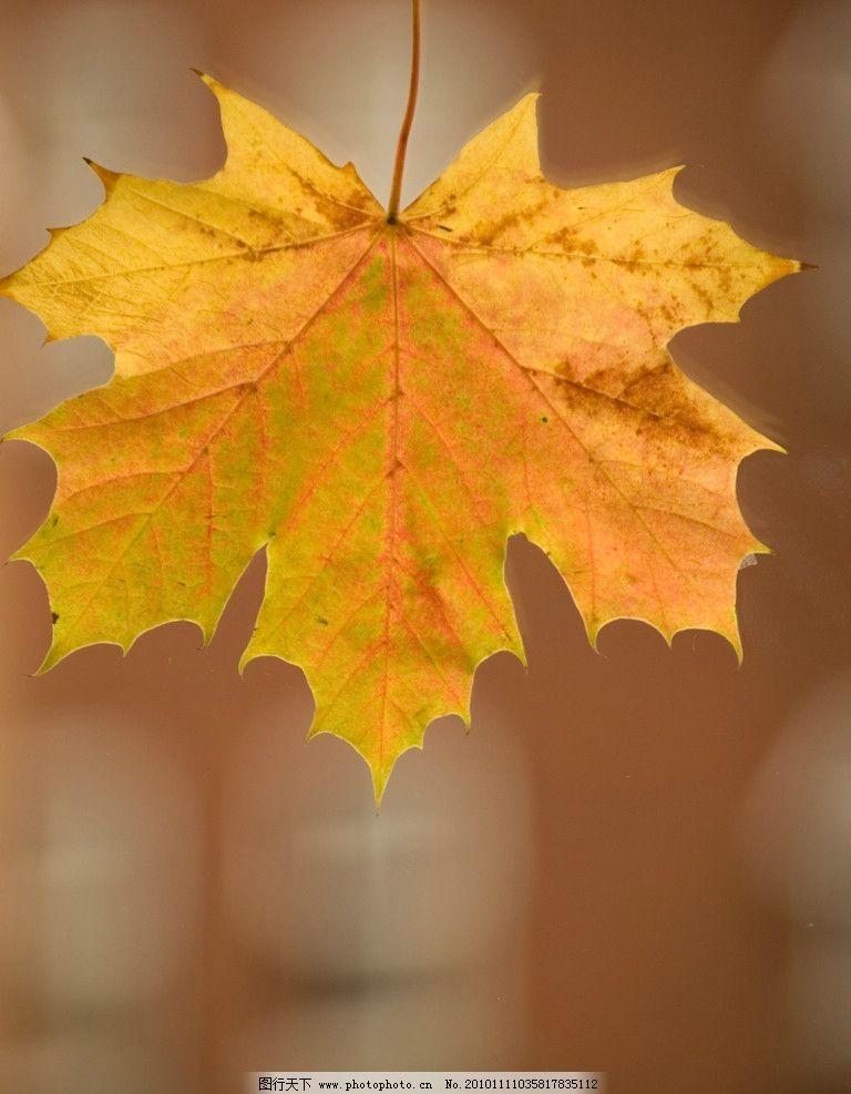 秋天唯美落叶图片