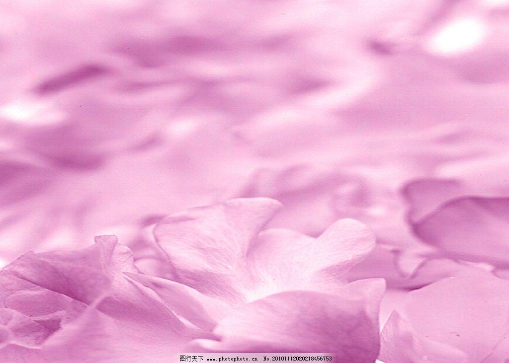 背景素材 背景 底纹 粉红色 花瓣 背景底纹 底纹边框 设计 72dpi jpg
