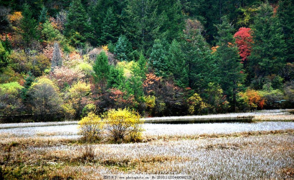 九寨沟 风景 山水 初秋 红叶 植物 树木 摄影