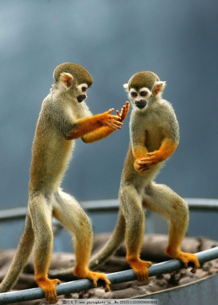 世界油画大师猴子作品