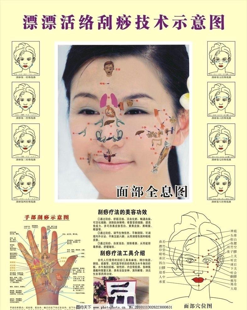 面诊 美容 刮痧疗法工具介绍 脸部全息图 矢量