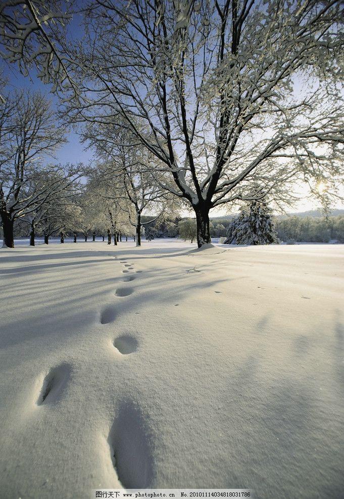 冬季雪景高清 冬天 雪地 雪树 树木 脚印 鞋印 冬季风光 冬季美景